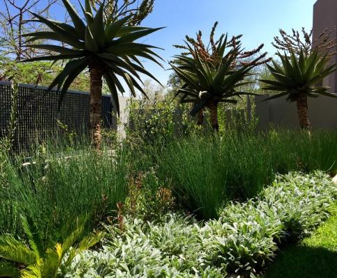 Indigenous garden plants