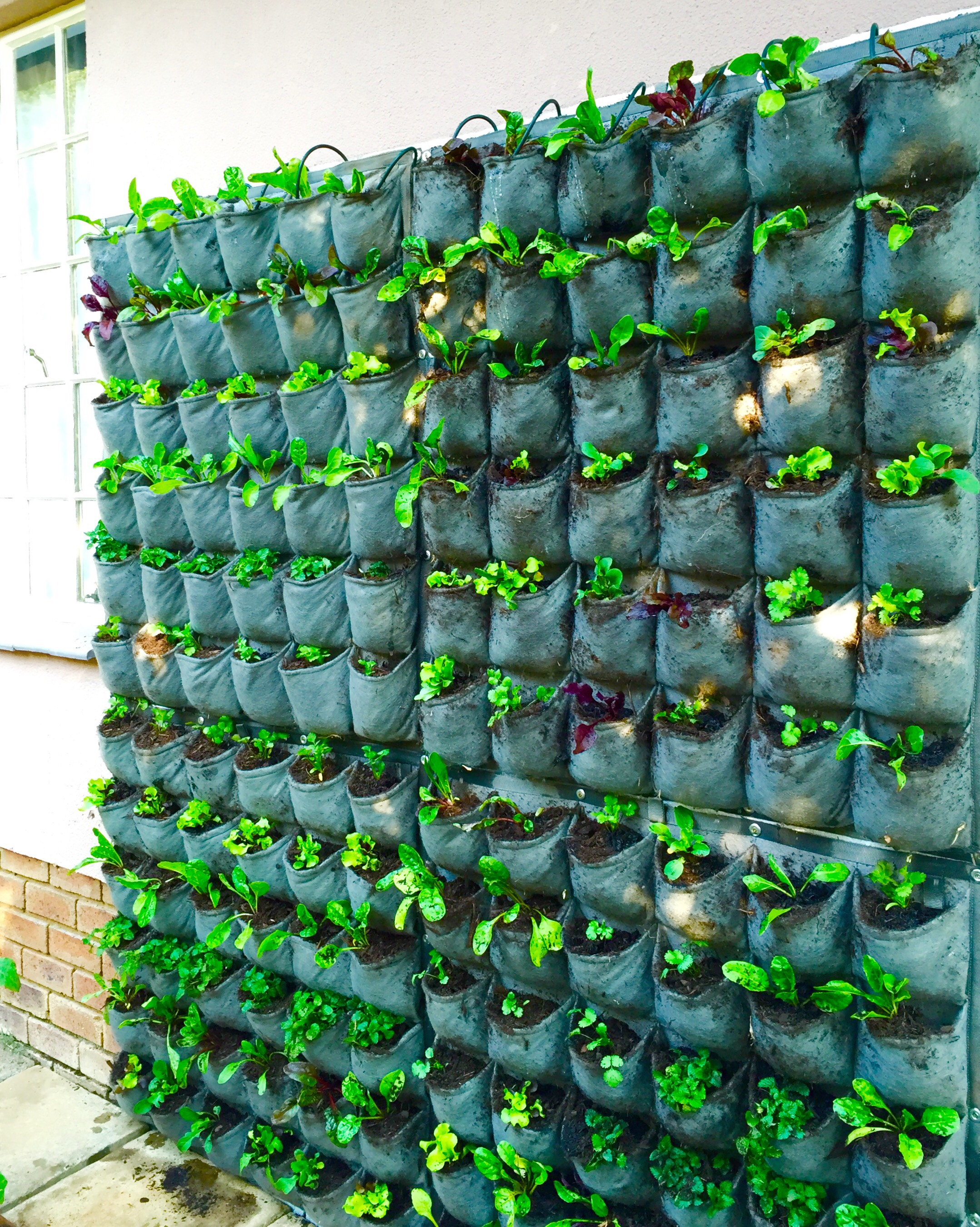 vegetables grow vertical smallrden gardening pictures a designs beautiful small ideas winter withables be in plans easiest to with design home garden vegetable can